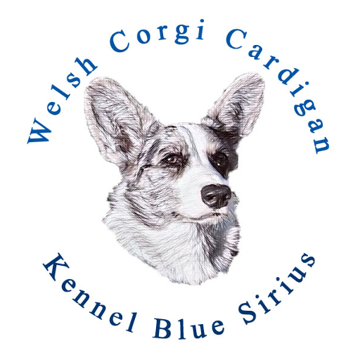 Kennel Blue Sirius